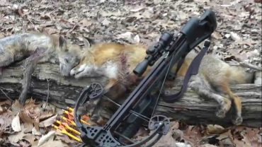 Best Crossbow for Hunting in 2018